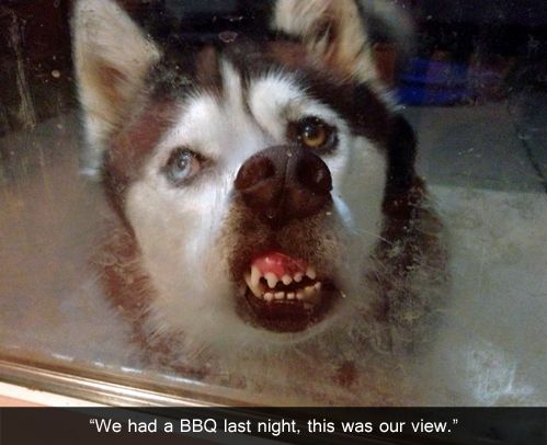 : Funny Animals, Dogs, Funny Pictures, Glass, Funny Stuff, Funnies, Humor, Moon Moon