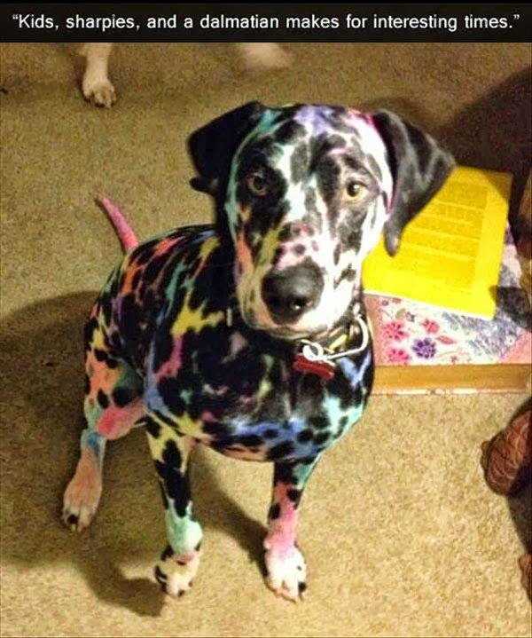 funny dogs: Animals, Dogs, Funnies, Kids, Funny Animal, Dalmatians, Lisa Frank, Frank Dog
