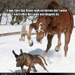 Funny horse pic: Funny Animals, Dogs, Horses, Funny Stuff, Humor, Funnies, Things
