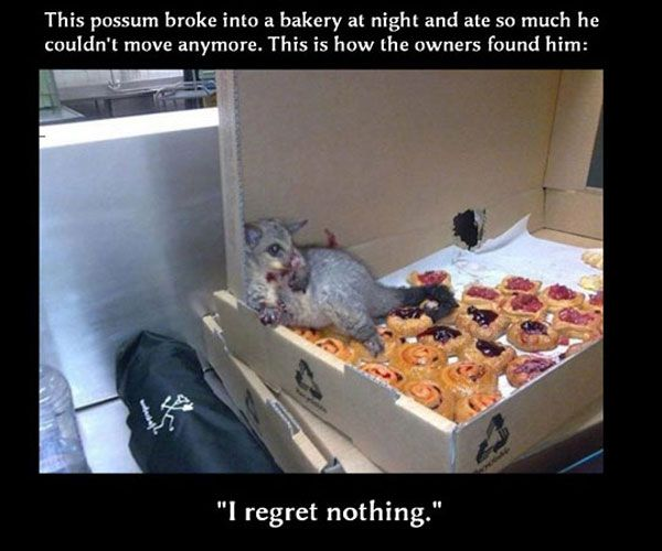 funny pictures of animals: Animals, Giggle, Funny Pictures, No Regrets, Funny Stuff, Funnies, Things, Possum