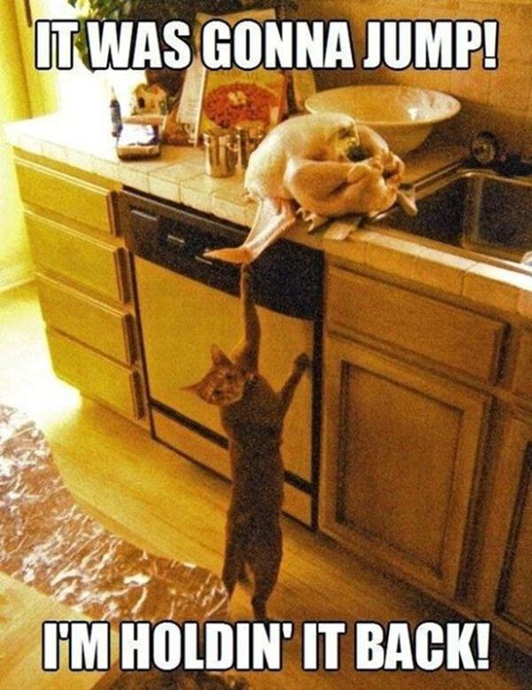 funny pictures of cats: Funny Animals, Funny Cats, Funny Stuff, Humor, Funnies, Kitty