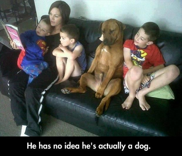 Funny Pictures Of The Day – 125 Pics: Ideas, Animals, Dogs, Funny Pictures, Pet, Funnies, Photo, Idea He S