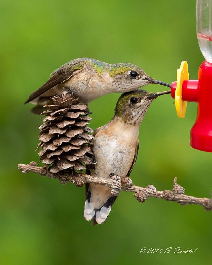I have yet to see this happen! Hummers are fairly territorial and don't tend to share :): Humming-Bird, Bird Hummingbirds, Beautiful Hummingbirds, Birds Hummingbird, Bull River, Photo, Hummingbirds Butterflies, Animal