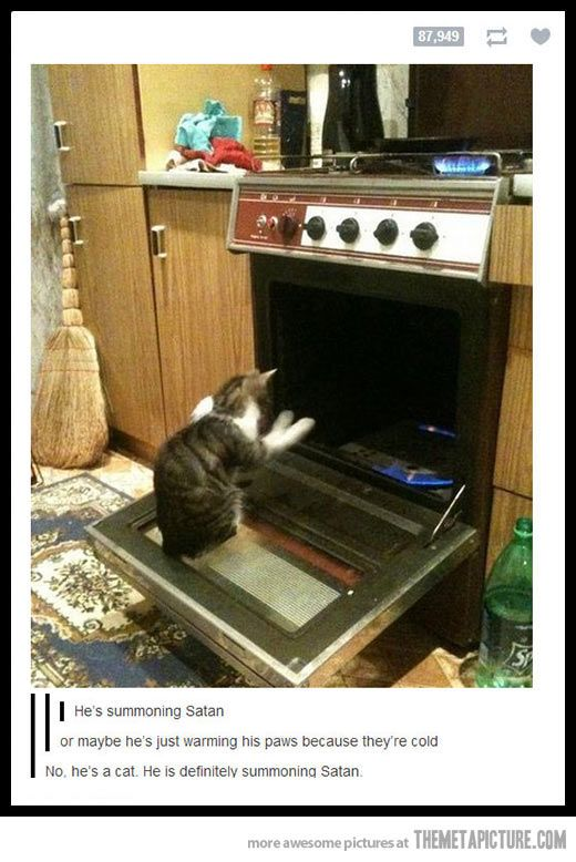 I sat there laughing for like five minutes and turned away. When I turned back I started laughing AGAIN.: Cats, Giggle, Animals, Funny Cat, Summoning Satan, Funny Stuff, Crazy Cat, Funnies