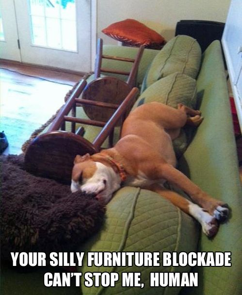 I think all I would be able to do is laugh: Animals, Silly Human, Dogs, Pet, Funny Stuff, Funnies, Funny Animal, Furniture Blockade