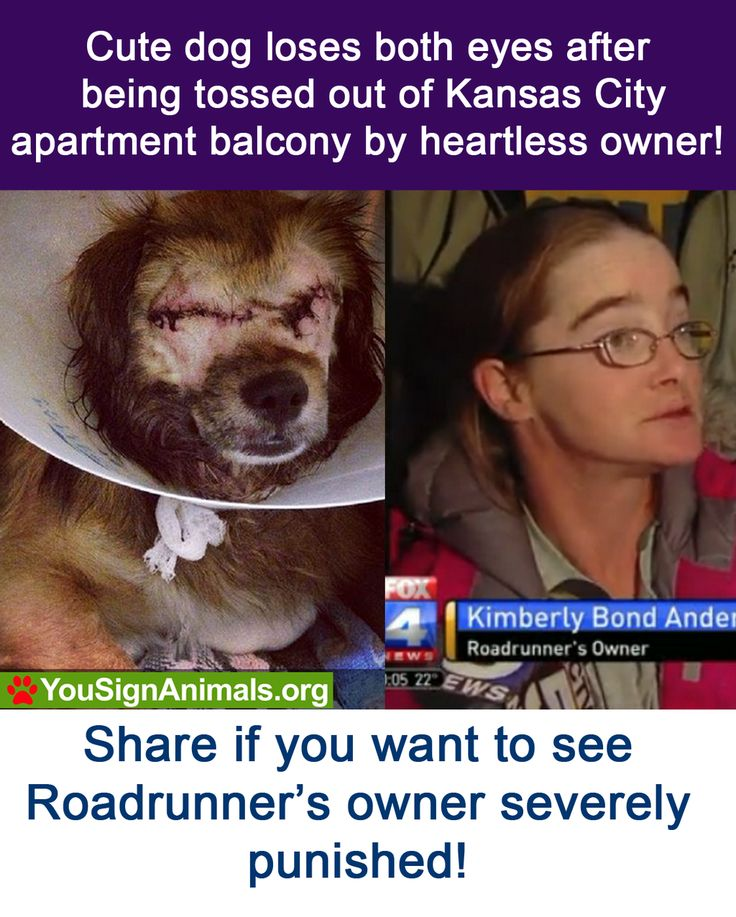 Justice for Roadrunner! Sign and Retweet Now: http://www.yousignanimals.org/redirect.php?t=605 … #animals: Animal Petitions, Animal Rights, Apartment Balconies, Stop Animal Cruelty, Investigation, So Sad