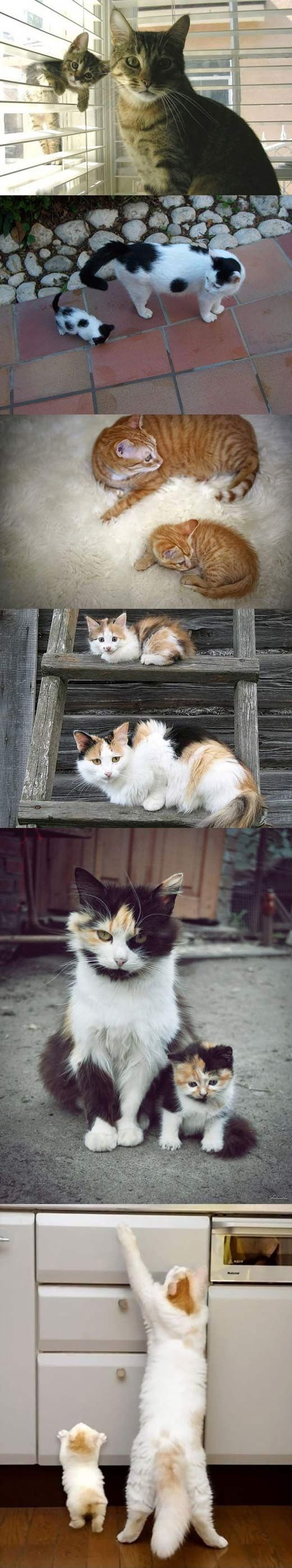 Like mother, like son/daughter: Cats, Kitten, Mini Me, Crazy Cat, Baby, Kitty, Animal