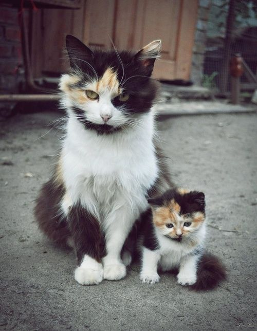 Mom and baby.: Cats, Animals, Mother, Pet, Funny, Mini Me, Baby, Kittens, Kitty