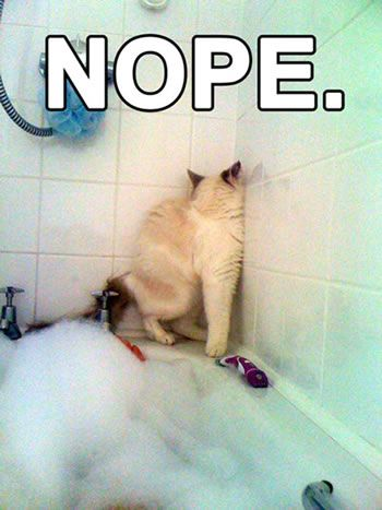 Nope! #funny #cats #funnycats: Cats, Animals, Nope, Bath, Funny Stuff, Humor, Funnies, Funny Animal