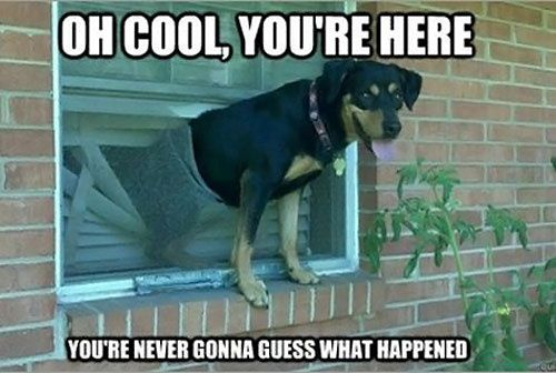 NoWayGirl | Funny Photos and Funny Videos - Part 3: Animals, Dogs, Pet, Funny Stuff, Humor, Funnies, Funny Animal
