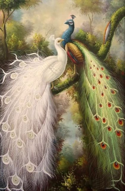 Oil painting white color peacock peafowl in forest: Oil Paintings, Peacocks, Oils, Forest, White Colors, Birds