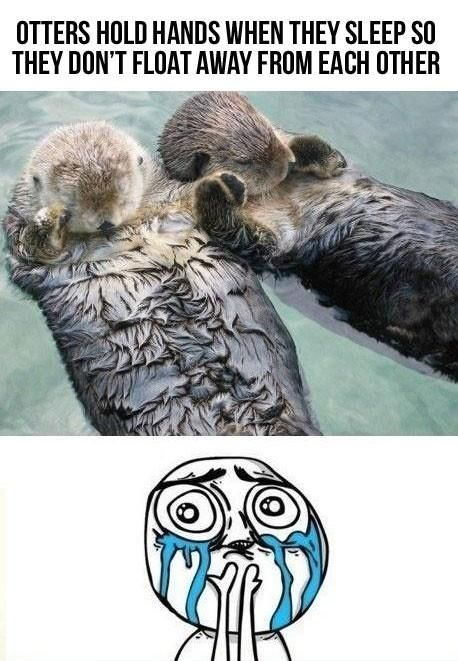 Otters hold hands when they sleep so they don't float away from each other: Hold Hands, Animals, Sweet, Holdhands, Otters Hold, Seaotter, Don T Drift, Sea Otters, Holding Hands