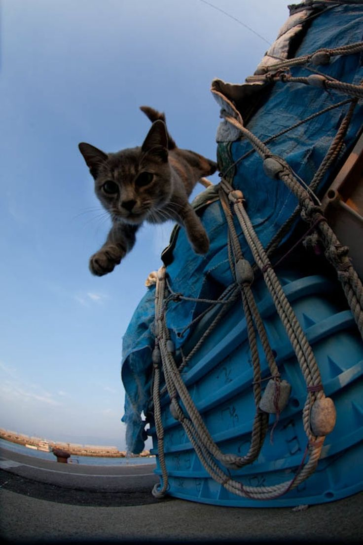 Photographer Fubirai has spent the last five years documenting the lives of the semi-wild cats that roam the island in Fukuoka, Japan. The cats are fed by local fishermen and wander freely through the streets, boatyards, porches, and houses of the city.: