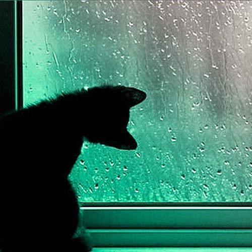 Something about this image has captured my imagination. The cat's curiosity at the rain is just too sweet. /ES: Window, Black Cats, Raindrop, Chat, Kitties Watch, Kitty, Rainy Days, Rain Drop, Animal