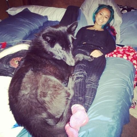 This is me and my, uh, well if I'm being honest me and my dad have no clue what he actually is but he's mine. I named him Wolfstar. He's pretty big, as you can see. I'm almost 6 foot... -Adan: Wolf Dogs, Dogs Cats Pets Horses, Content Wolf