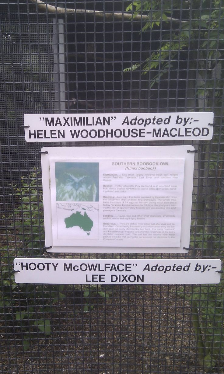 This is why you don't let people name the zoo animals they adopt. *facepalm* That said, I still can't stop laughing. =): Giggle, Names, Funny Stuff, Humor, Hooty Mcowlface
