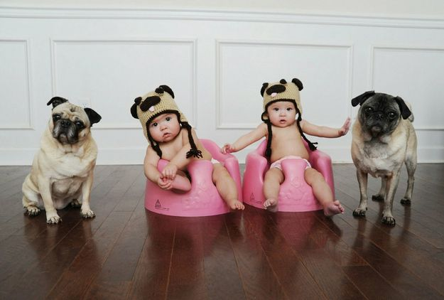 Two of my favourite things together. Pugs and crochet, the babies are pretty cute too. Should make one for each member of my family!!: Babies, Animals, Dogs, Pug Life, Pet, Pug Hats, Photo, Baby Pugs