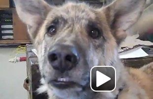 Ultimate Dog Tease. Love this video!!: Dogs, Dog Tease, Videos, Funny, Funnies, Animal