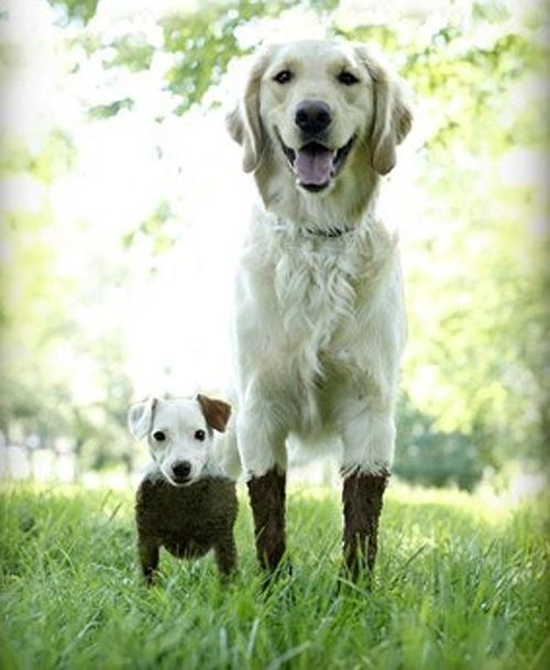 We definitely did not go in the mud. Honestly, we went around it. Promise.: Animals, Dogs, Friends, Mud, Pets, Funny, Puppy, Smile