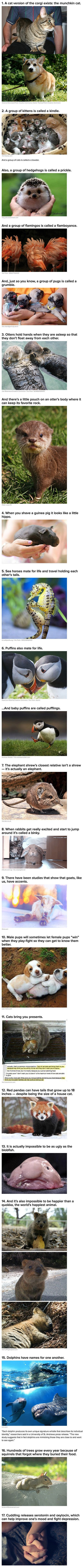 We have rounded up some geeky animal facts and stories you never knew about.: Fun Facts, Interesting Animal Facts, Animals Nature Travel, Facts Stuff, Random Facts, Awesome Facts, Cat Brings