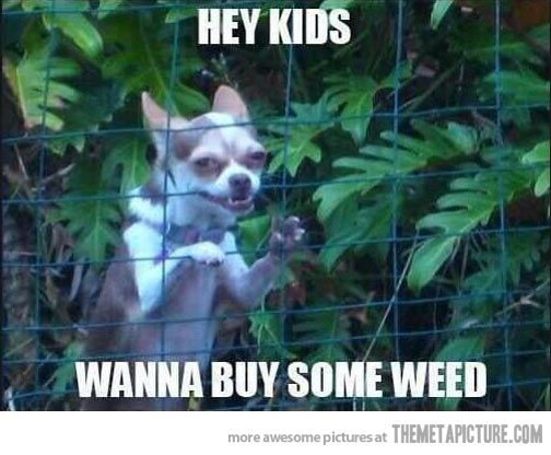 Why does this make me laugh?: Hey Kids, Giggle, Animals, Dogs, Funny Stuff, Funnies, Humor, Chihuahua