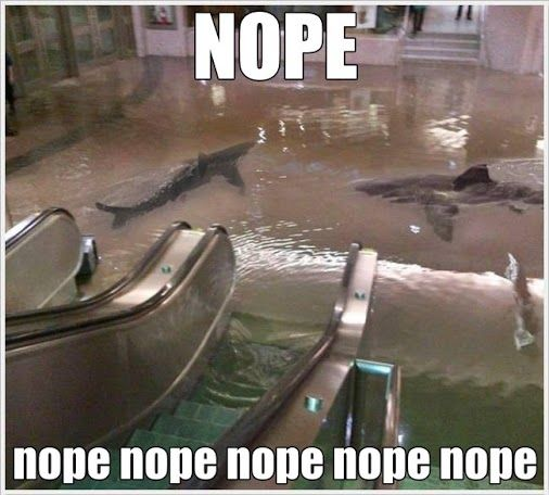 ALL ABOARD THE NOPE TRAIN, SOUTH-BOUND FOR NOPEVILLE <--- that caption. :D: Real Life, Nope Nope, That S Scary, A Sharknado, Sharks, Tanks, Worst Nightmare