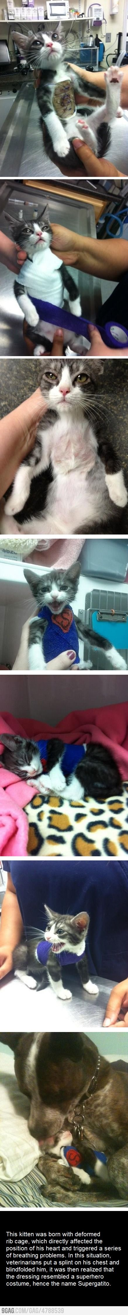 Awww little sweet baby!!: Cats, Super Cat, It S Supergatito, Poor Kitty, Dog, Animal