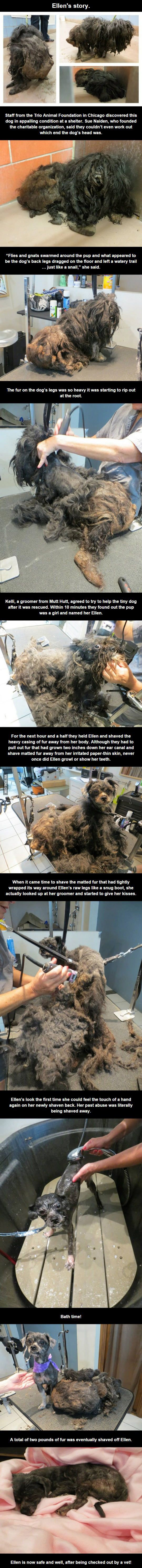 awww poor Ellen I am sooooo happy people were able to help her <3 she deserves it: Hairy Dogs, Aww, Help Animals, Awesome, Pet, Ellen S Story, Puppy