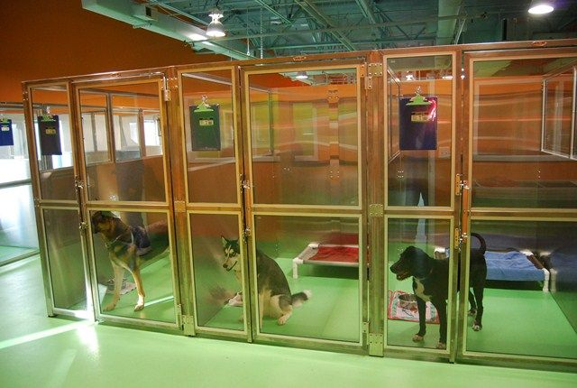 Beautiful runs - classy, easy to clean, and not completely glass to give the dogs privacy from one another.: Dog Boarding, Dogs Privacy, Pet, Doggy Daycare, Completely Glass, Dog Kennels, Doggie Daycare