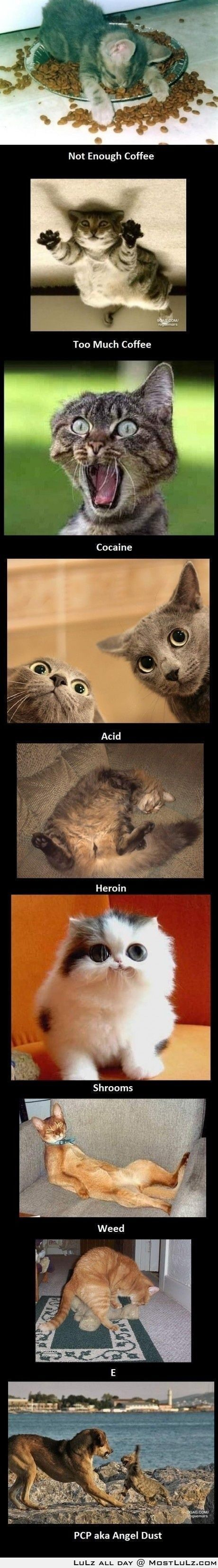 Daily Humor - Enjoy The Laughs: Cats, Animals, Funny Cat, Drugs, Crazy Cat, Funnies, Humor