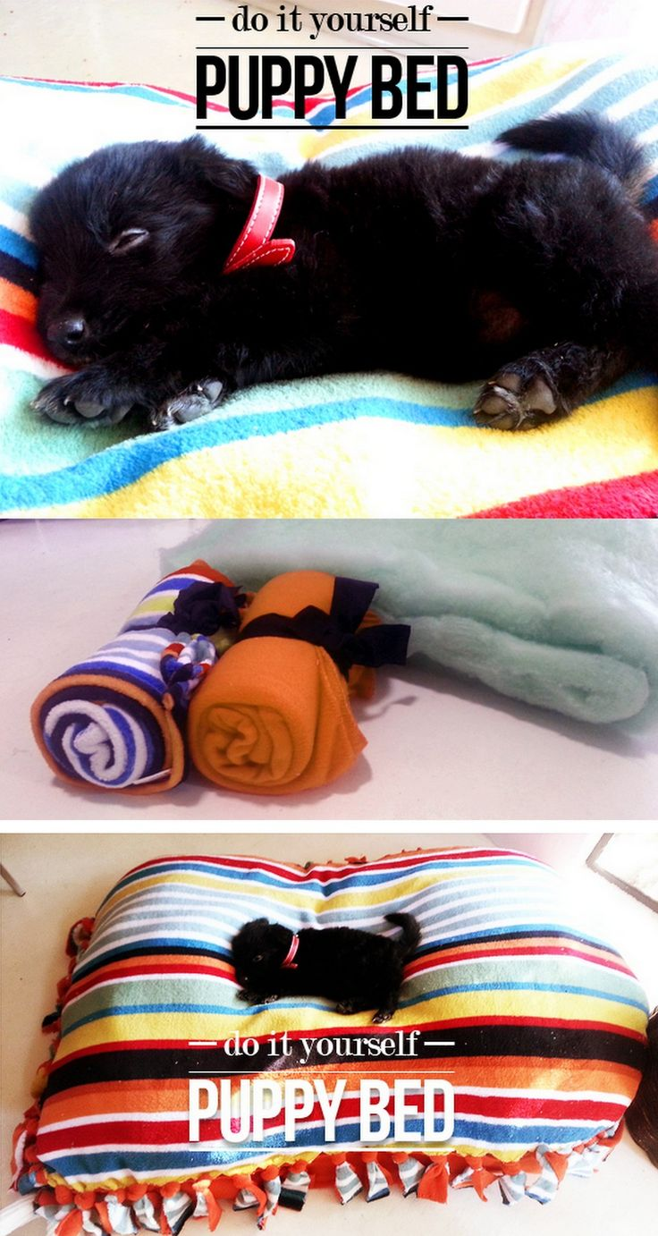 DIY Cheap and Easy Pet Bed Tutorial from Made in Pretoria here. This uses the same technique for making those fleece blankets. Please watch your dogs with any toys or beds with ties like these. You don't want to spend $1,000 on surgery to get non food ite
