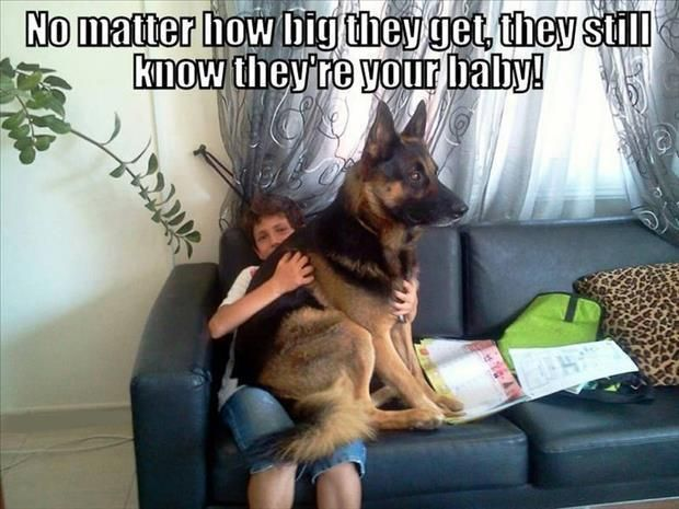 Dump A Day Attack Of The Funny Animals - 45 Pics: Babies, Animals, Dog Owners, Dogs, Pets, Funny, Big Baby, German Shepherds