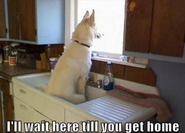 funny animal pictures, dumpaday (3). I Now that's a training issue.: Animals, Dogs, Pets, Sink, Funnies, Funny Animal, German Shepherd, Friend