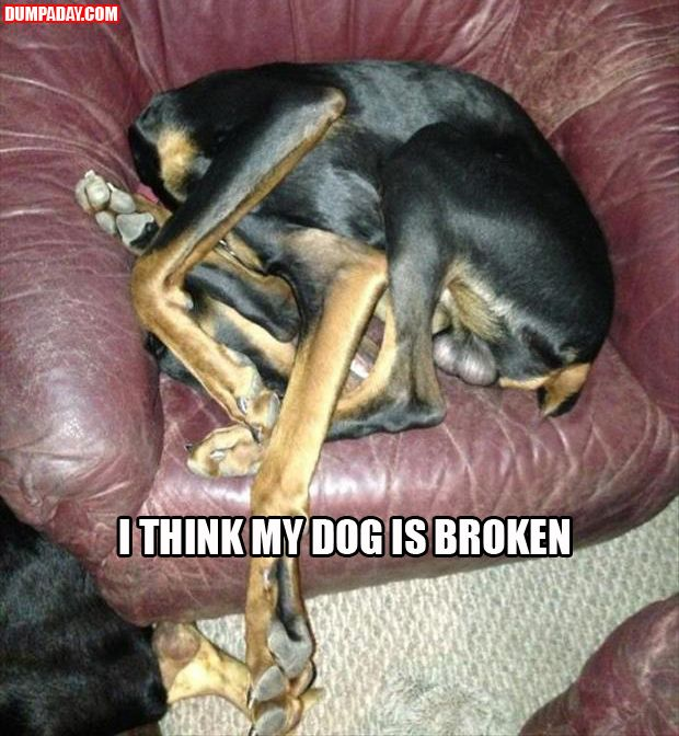 Funny Pictures: Broken, Animals, Dogs, Funny Pictures, Funny Stuff, Humor, Funnies