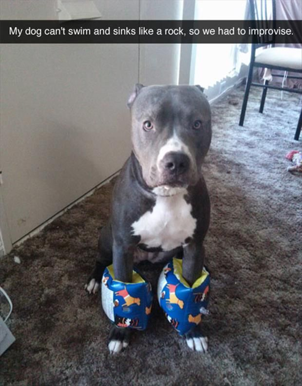 Funny Pictures Of The Day - 105 Pics: Dogs, Funny Pictures, Funnies, Funny Animal, Dog Can T, Pittie
