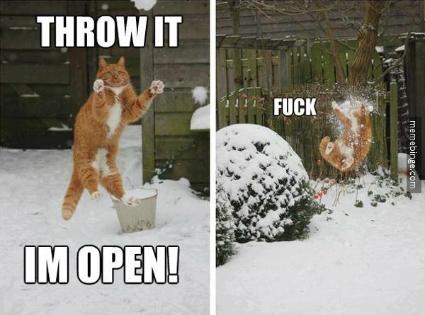 Go long! more funny pics on facebook: https://www.facebook.com/yourfunnypics101: Cats, In Open, Animals, Snowball, Funny Stuff, Funnies, Humor, Funny Animal