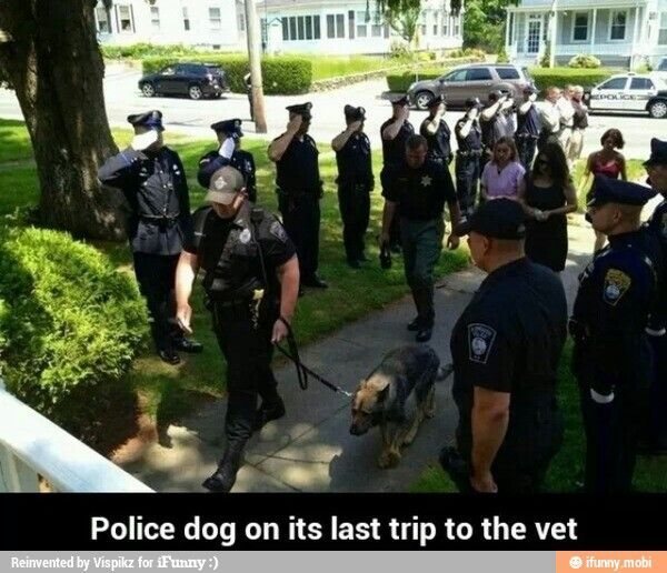 I couldn't stop the tears from falling. This is such a touching photo of a Police dog on his final walk...: Police Officer, Final, Animals, Hero, Policedogs, Police Dogs, German Shepherd, Photo