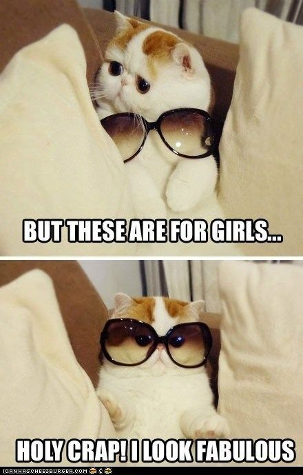 "Rockin' Exotic Shorthair - ""You Rock That Androgynous Style, Kitteh!"": Cats, Animals, Funny Cat, Funny Stuff, Funnies, Things, Fabulous, Holy Crap"