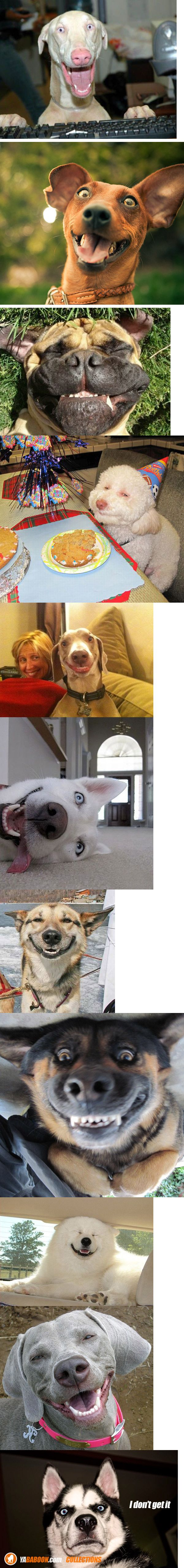 That Was a Funny Joke !! - Haa Haa: Smiling Dogs, Giggle, Happy Dogs, So Funny, Smiley Dog, Animal