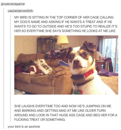 This idiot dog. | 23 Of The Cutest Things That Have Ever Happened On Tumblr: Funny Parrot, Cutest Things, Tumblr Funny, Funny Tumblr Post, Dog, Birds, Animal