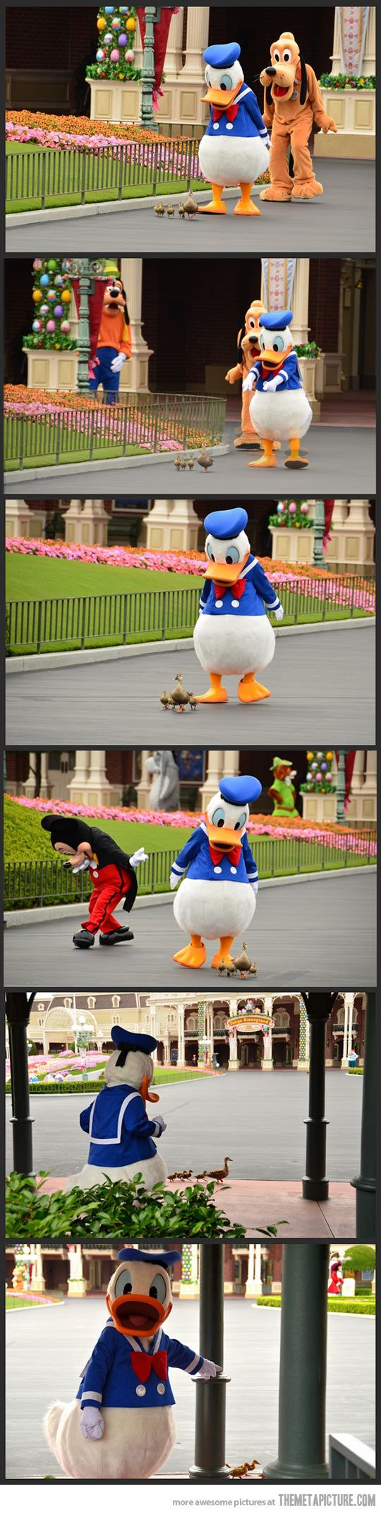 THIS IS TOO CUTE! i'm bringing ducks to disneyland: Picture, Disney Magic, Donald O'Connor, Donald Duck, So Happy, Ducks, Things Disney