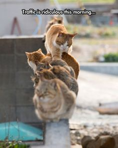 Cats on a wall - ''Traffic is ridiculous this morning.'' source: http://themetapicture.com/being-stuck-in-traffic/: Funny Animals, Excuse Me, Traffic, Funny Cats, Funnies, Humor, Mornings, Kitty, Cat Lady