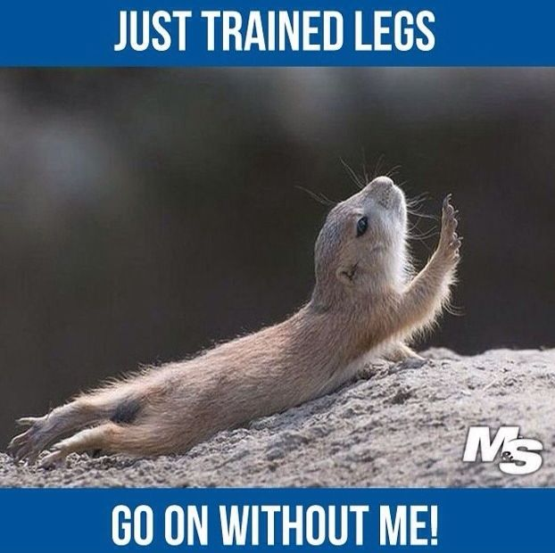 Go on without me! Leg Day | Funny Fitness | Gym Memes | Gym Humour | www.leanerstrongeryou.co.uk: Legday Enough, Leg Day Meme, Legday Gymmeme, Hate Legday