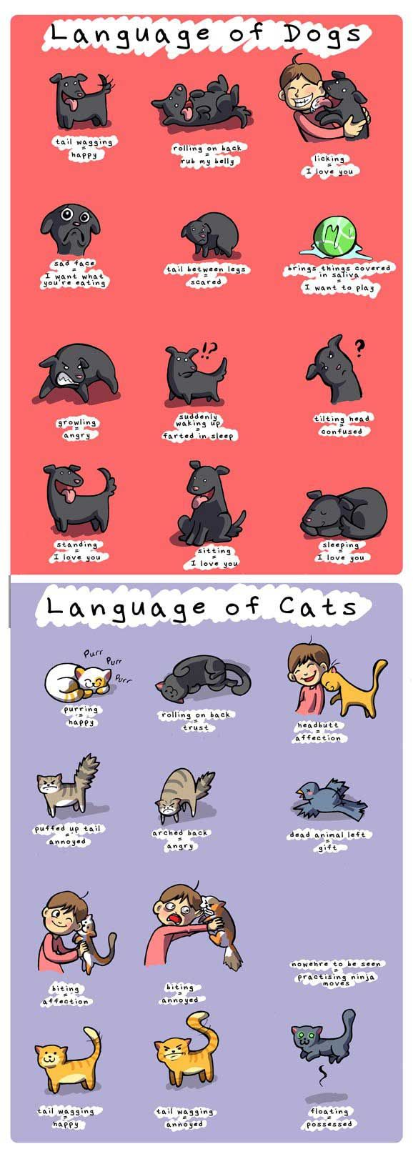 true.: Helpful Guide, Animals, Dogs And Cats, Pet, Dog Cat, Funny, Cats And Dogs, Language