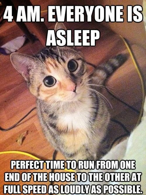 30 hilarious struggles only cat owners will understand. The #4 really made my day LOL!: Cats, Animals, Funny Cat, Crazy Cat, Funny Stuff, Funnies, Kitty