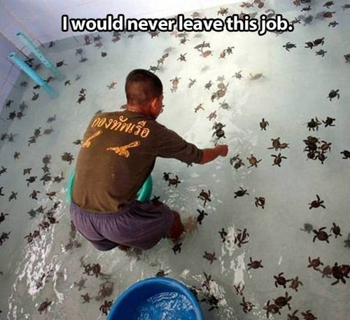 at first i thought they were spiders and i was like NOPE but then i realized they were baby sea turtles and i was like NEVERMIND YES PLEASE #bestjobever: Bucket List, Babies, Animals, Seaturtles, Dream Job, Funny, Things, Baby Turtles, Baby Sea Turtles