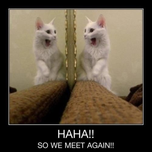 cat pics with funny captions   ... All Funny Animal Pictures With Captions Very Funny Cats li0tChL9: Funny Animals, Kitty Cats, Funny Animal Pictures, Funny Caption, Funny Cats, Funny Stuff, Crazy Cat, Humor