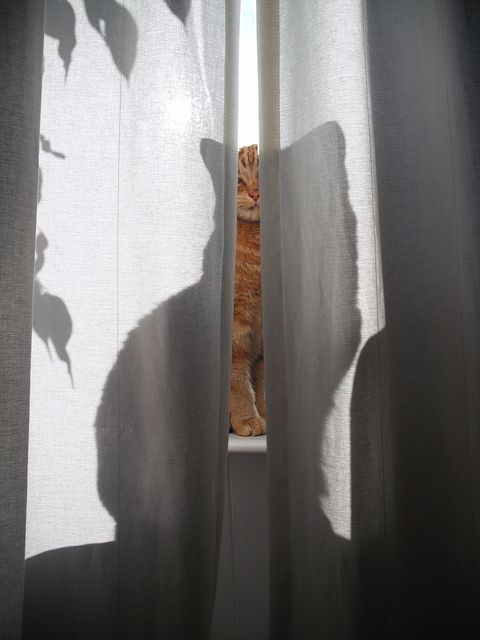 -: Cats, Animals, Kitty Cat, Shadow Cat, Chat, Peek A Boo, Photo, Shadows, Cat Lady