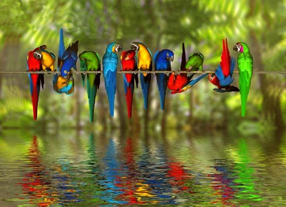 colorful... Birds on a Wire... !IEC: Animals, Nature, Colorful, Parrots, Colors, Beautiful Birds, Photo, Rainbow