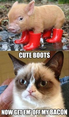 Funny Pictures Of The Day – Grumpy Cat